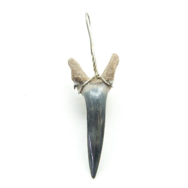 Shark Tooth Pendant(Small)-0