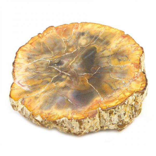 Petrified Wood Stem-85542