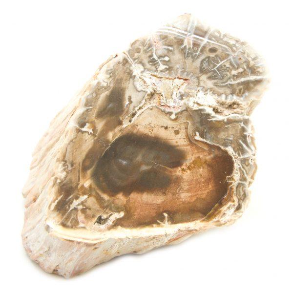 Petrified Wood Stem-85615