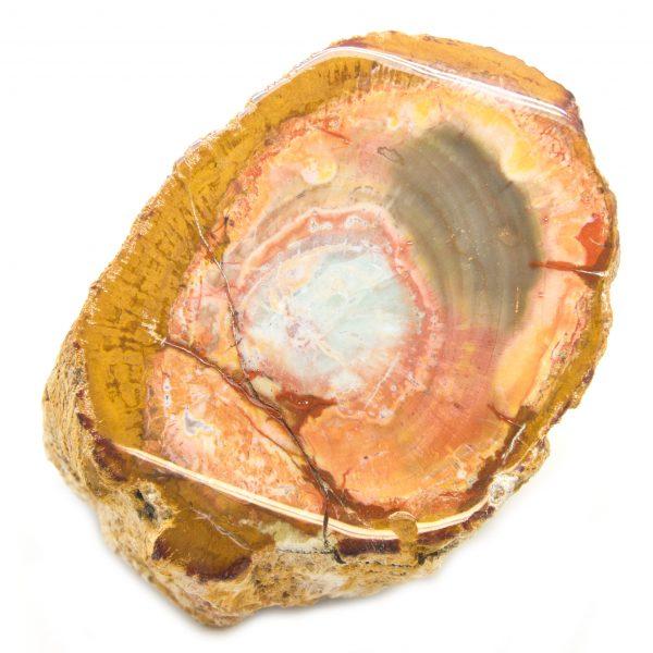 Petrified Wood Stem-85626