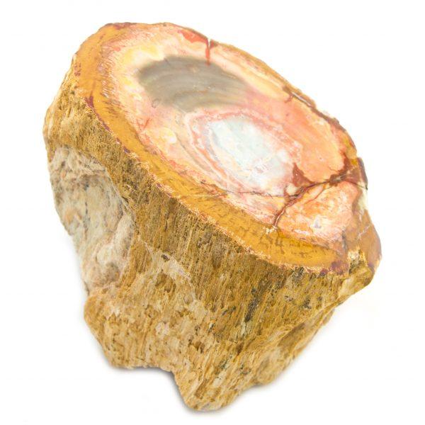 Petrified Wood Stem-85627