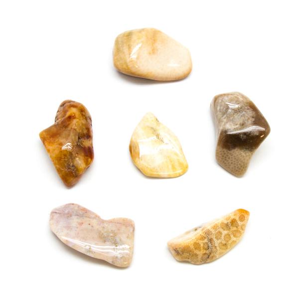 Agatized Coral Tumbled Stone Set (Extra Large)-0