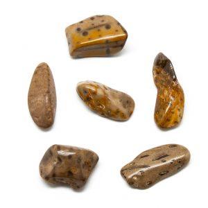 Petrified Palm Wood Tumbled Stone Set (Extra Large)-0