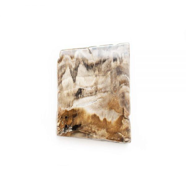 Polished Petrified Wood Slab-203778