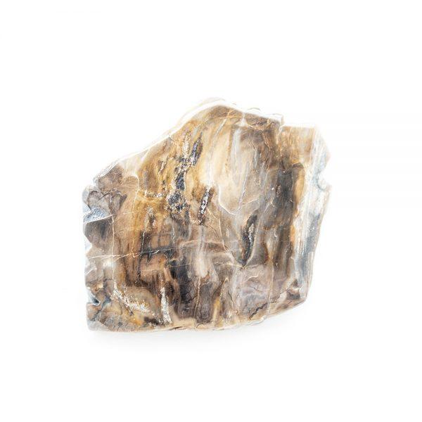 Polished Petrified Wood Slab-203777