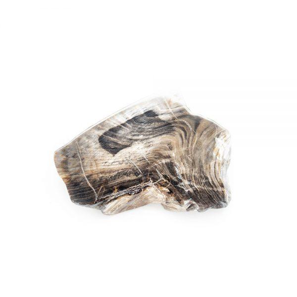 Polished Petrified Wood Slab-203779