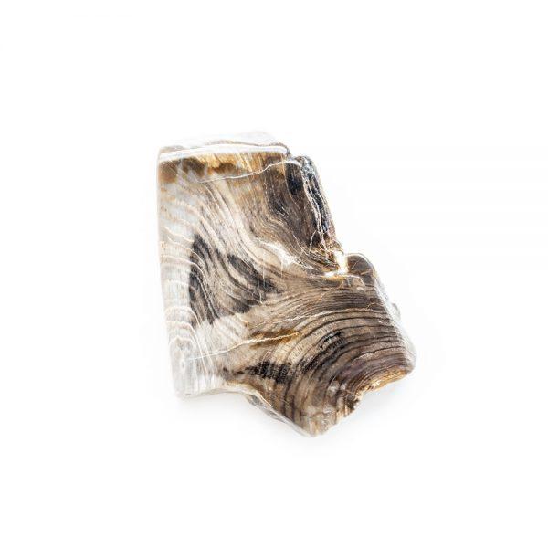 Polished Petrified Wood Slab-203780