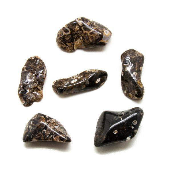 Turritella Agate Tumbled Stone Set (Extra Large)-207762