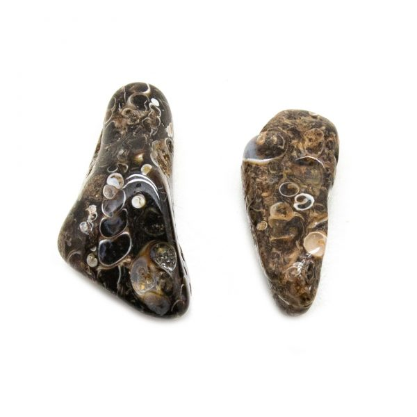 Turritella Agate Aura Stone Pair (small)-0