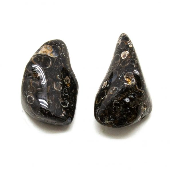 Turritella Agate Aura Stone Pair (small)-207769