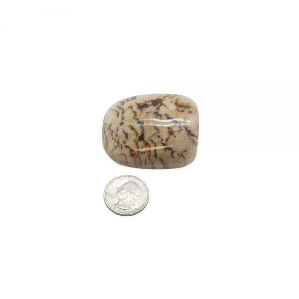 Zebradorite Aura Stone-210632