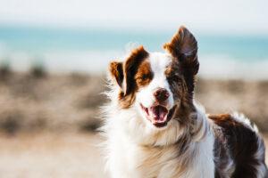 spirit animals - your spirit guides